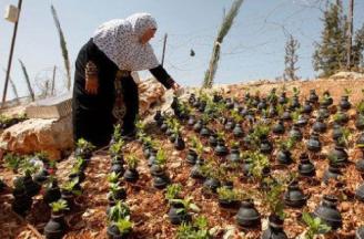 AP-Palestinan