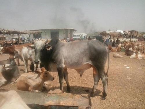 WNI DI SUDAN IDUL ADHA SABTU