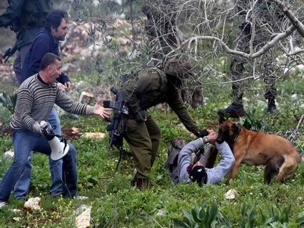 ANJING POLISI ISRAEL SERANG PEMUDA PALESTINA DI KOTA KHALIL