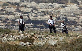 EKSTRIMIS ISRAEL RUSAK 1.000 POHON ZAITUN DI HEBRON