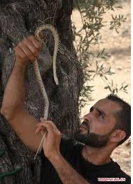 LAWAN TENTARA ISRAEL PEMUDA PALESTINA GUNAKAN ULAR