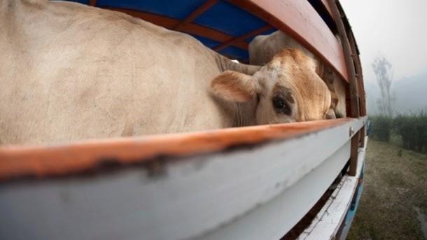 Peternakan Hewan Halal akan Dibangun di Kazakhstan
