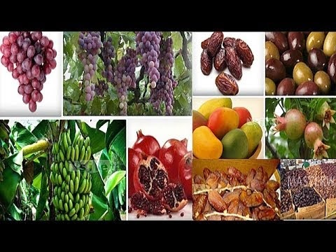 Manfaat Buah Delima, Tiin, Zaitun, dan Kurma Bagi Kesehatan