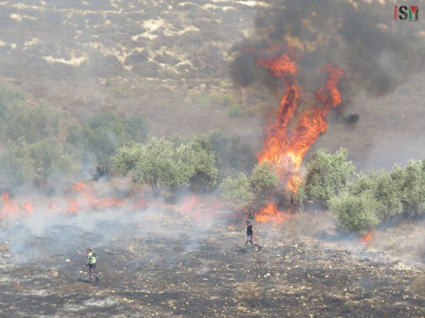 Israel Juga Serang Lahan Pertanian Gaza