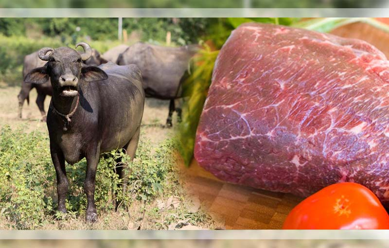 Kementan Periksa Kehalalan Daging Kerbau Impor India