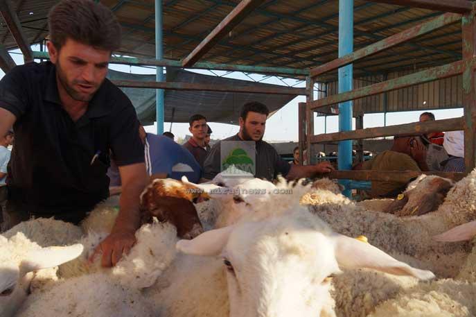 Aqsa Working Group Luncurkan Program Qurban untuk Gaza