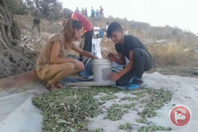 Anak-anak Pemukim Ilegal Israel Berusaha Curi Buah Zaitun Dikawal Tentara