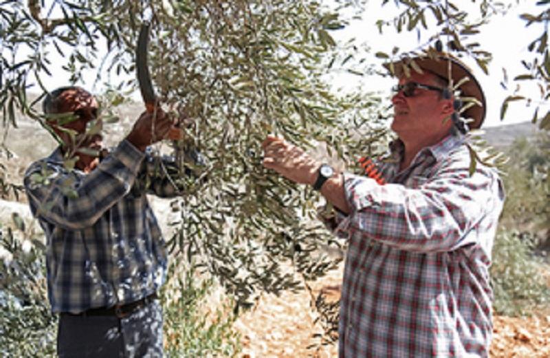 Konsul Jenderal Inggris Dukung Petani Palestina