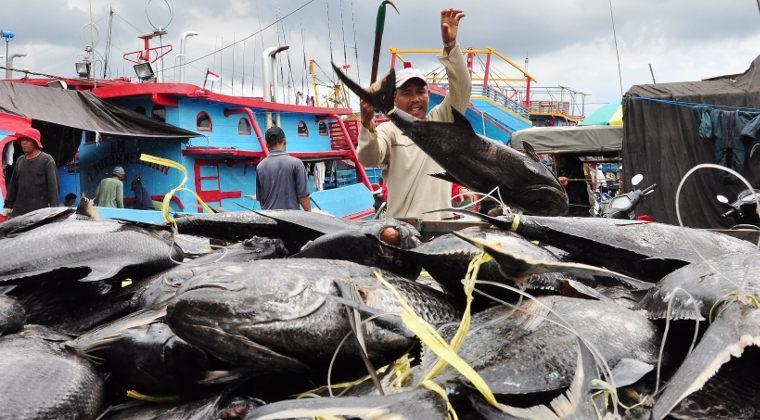 Korea Selatan Minati Ikan Produksi Maluku