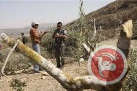 Pemukim Israel Merusak Pohon-pohon Zaitun di Dekat Desa Ramallah