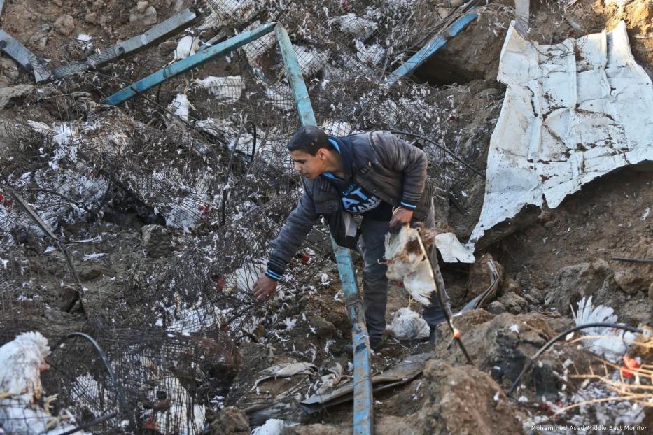 Ratusan Ayam Mati oleh Serangan Udara Israel di Gaza