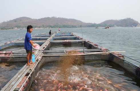 Manfaatkan Sampah Organik, Mahasiswa UII Ciptakan Pelet Ikan Protein Tinggi