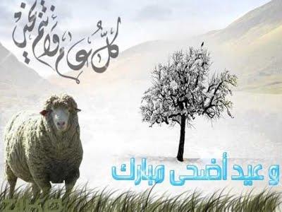 Sepuluh Keutamaan Ibadah Qurban