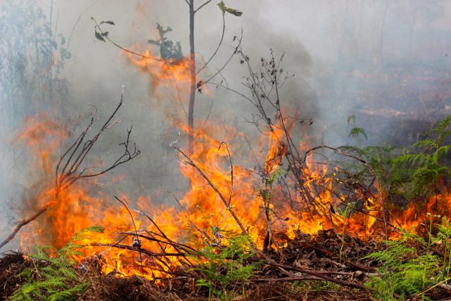 IPB Teliti Indikasi Kebakaran Hutan dan Gambut