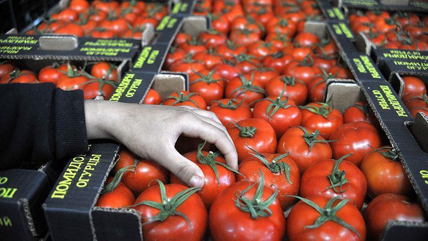 Rusia Cabut Larangan Impor Tomat dari Turki