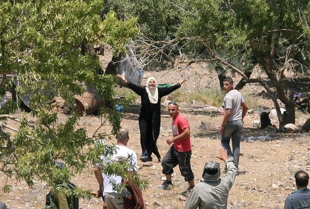 Pemukim Israel Kembali Serang Petani Palestina Saat Penen Zaitun