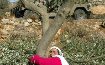 Pemukim Yahudi Curi Buah Zaitun Warga Palestina