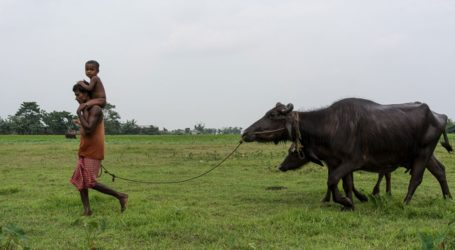 Teka-teki Masa Depan Orang-orang Bengali Assam