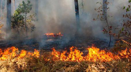 Kebakaran Hutan dan Lahan Aceh Capai 225 Hektare