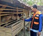 Ternak Desa Berdaya Binaan Rumah Zakat Berkembang Pesat