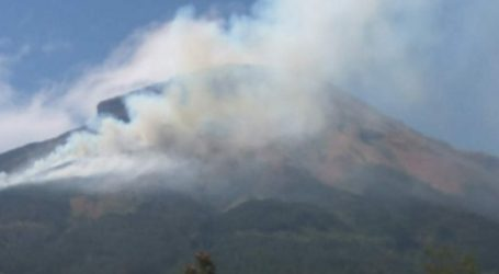 Kebakaran Hutan dan Lahan Landa Gunung Sindoro, Jalur Pendakian Ditutup