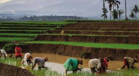 Pemerintah Turunkan Angka Kemiskinan dengan Pengelolaan Dana Desa Terpadu