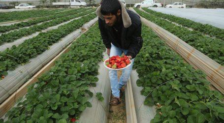 Pertanian Gaza di Tengah Blokade