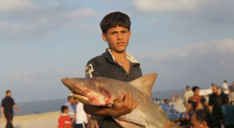 Nelayan Gaza Jaring Puluhan Ikan Hiu