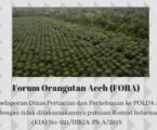 Forum Orangutan Aceh Laporkan Dinas Pertanian dan Perkebunan Terkait Sengketa Informasi