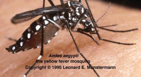 Bahayanya Nyamuk Ketika Allah Jadikan Pembunuh