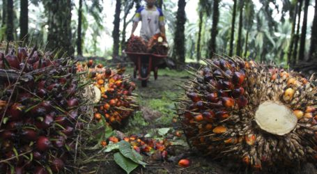 Ekspor Minyak Sawit Malaysia Turun