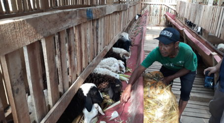 DD Kembangkan Program Kampoeng Ternak Nusantara