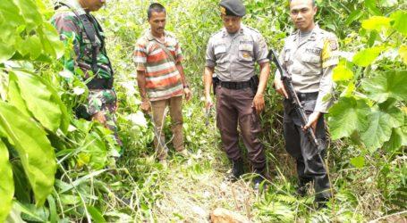 Ternak Warga Aceh Selatan Dimangsa Harimau