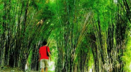 Falsafah Bambu dalam Perjuangan