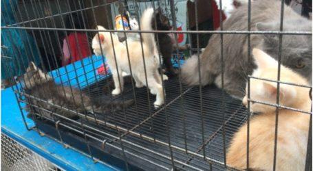 Shenzhen, Kota Pertama di Cina yang Larang Warganya Konsumsi Kucing dan Anjing