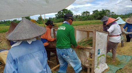 Di Tengah Wabah Corona, Kelompok Tani Binaan BAZNAS Tetap Panen Besar