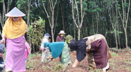 TRC-19 Lampung Giatkan Ketahanan Pangan Antisipasi Situasi Terburuk