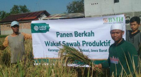 Perdana, Baitul Wakaf Panen 4,5 Ton Beras di Lahan Sawah Wakaf Produktif