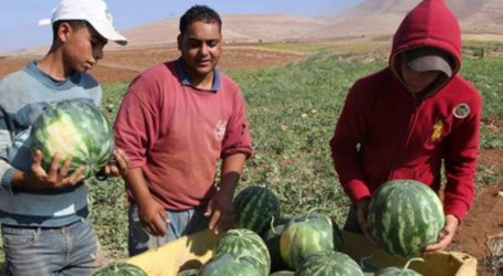Semangka Israel Membanjiri Tepi Barat