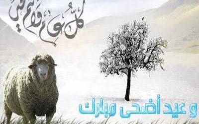 13 Keutamaan Ibadah Qurban pada Bulan Dzulhijjah