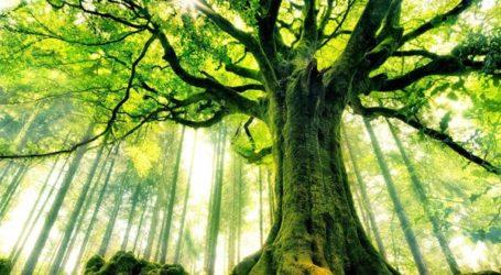 Pepohonan Di Surga