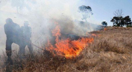 Balon Api Picu Kebakaran Di 36 Lokasi Permukiman Israel