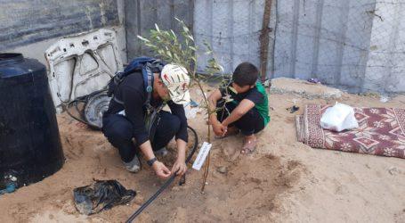 Relawan Indonesia Tanam 1.000 Pohon Zaitun untuk Warga Gaza