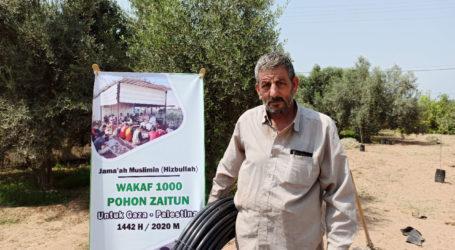 Jama'ah Muslimin (Hizbullah): Program Wakaf 1.000 Pohon Zaitun di Gaza Lampaui Target