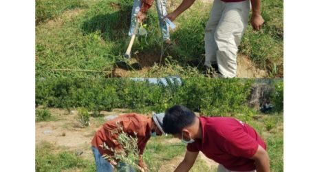 Relawan Indonesia Kembali Tanam 133 Pohon Zaitun di Gaza Tengah