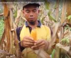 Panen Melimpah di Kebun Ketahanan Pangan TRC-19 Wilayah Lampung