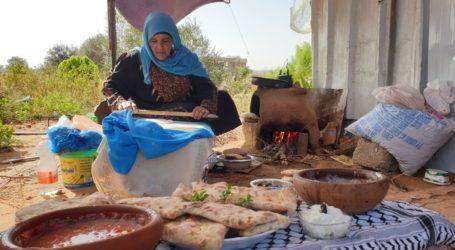 Panen Zaitun di Gaza, Suasana Tradisional dengan Budaya Rakyat