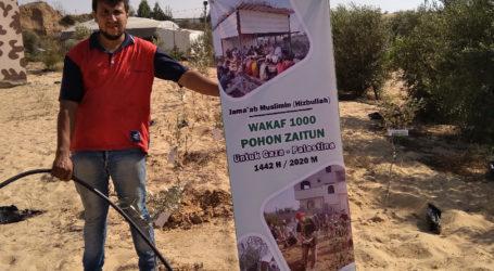 Penanaman Pohon Zaitun Simbol Perjuangan Palestina