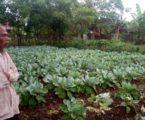 Misi Teknik Pertanian Taiwan di Indonesia: Kerjasama Selama 44 Tahun