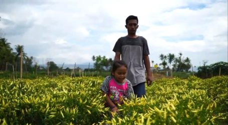 "Misi Teknik Pertanian Taiwan di Indonesia:Film Pendek ""Spicy Life"""